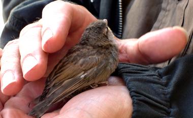 Oiseau sauvé de La Rochelle